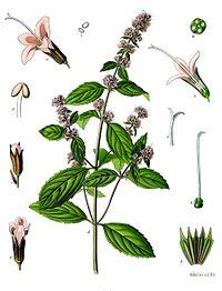 Biological properties of medicinal plants: a review of